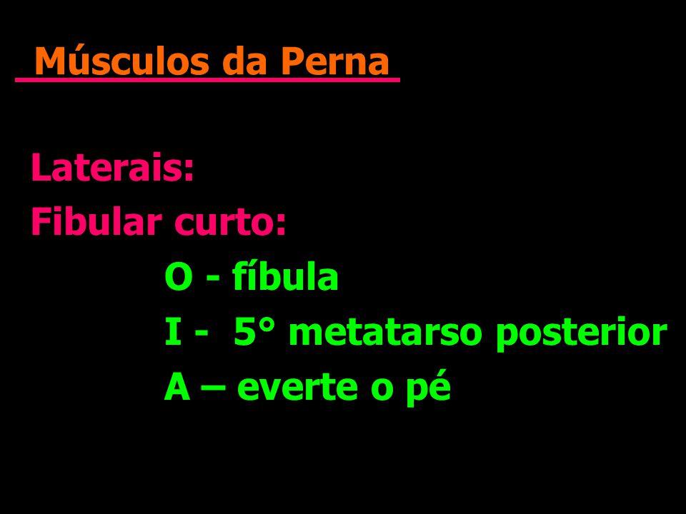Músculos da Perna Laterais: Fibular curto: O - fíbula I - 5° metatarso posterior A – everte o pé Laterais: Fibular curto: O - fíbula I - 5° metatarso