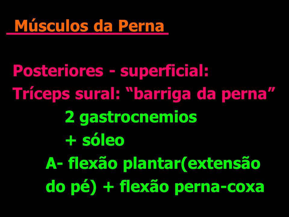 Músculos da Perna Posteriores - superficial: Tríceps sural: barriga da perna 2 gastrocnemios + sóleo A- flexão plantar(extensão do pé) + flexão perna-