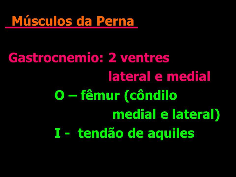 Músculos da Perna Gastrocnemio: 2 ventres lateral e medial O – fêmur (côndilo medial e lateral) I - tendão de aquiles Gastrocnemio: 2 ventres lateral