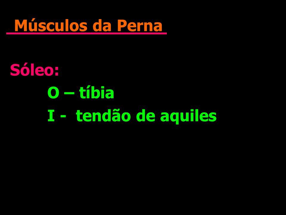 Músculos da Perna Sóleo: O – tíbia I - tendão de aquiles Sóleo: O – tíbia I - tendão de aquiles