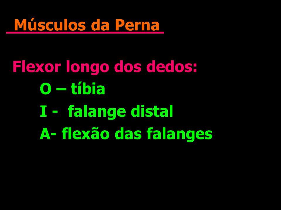 Músculos da Perna Flexor longo dos dedos: O – tíbia I - falange distal A- flexão das falanges Flexor longo dos dedos: O – tíbia I - falange distal A-