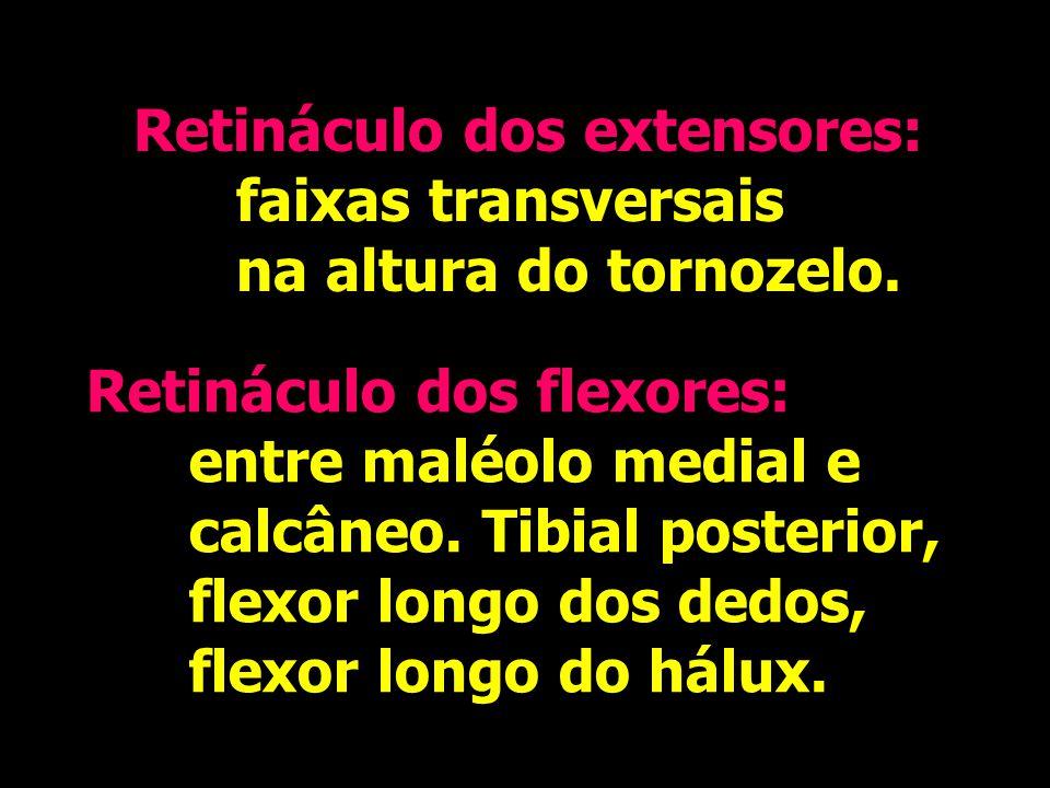 Retináculo dos extensores: faixas transversais na altura do tornozelo. Retináculo dos extensores: faixas transversais na altura do tornozelo. Retinácu