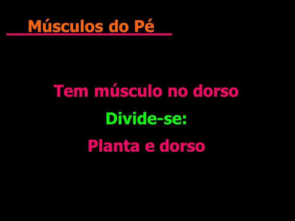 Músculos do Pé Tem músculo no dorso Divide-se: Planta e dorso Tem músculo no dorso Divide-se: Planta e dorso