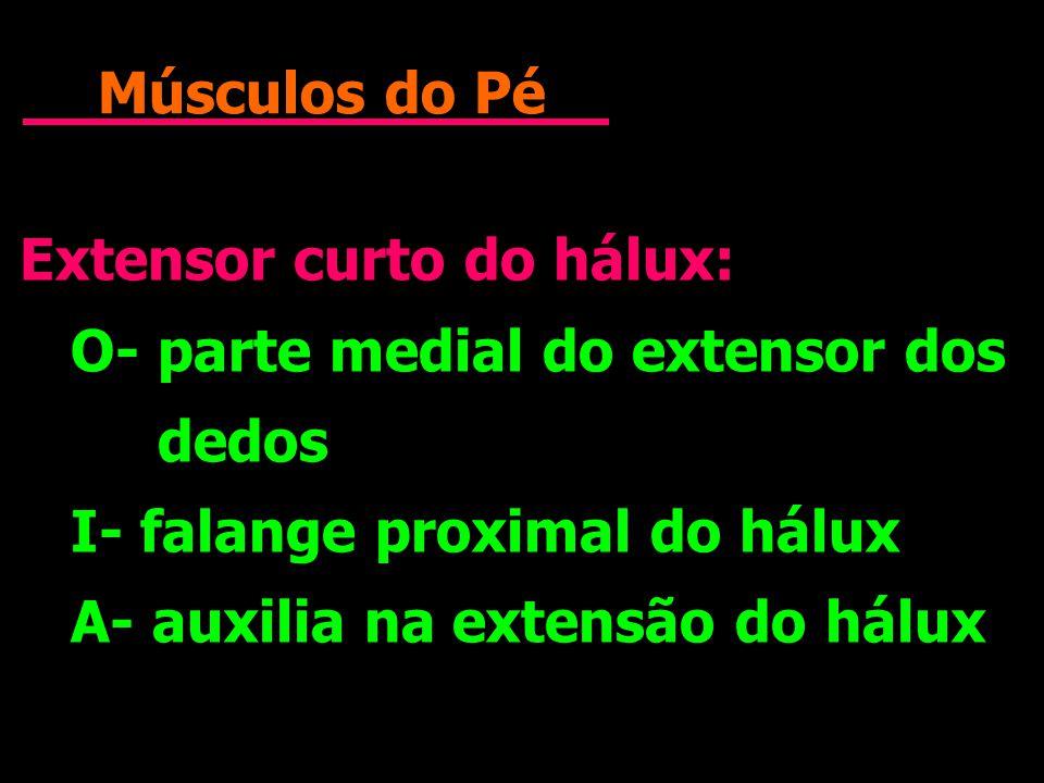 Músculos do Pé Extensor curto do hálux: O- parte medial do extensor dos dedos I- falange proximal do hálux A- auxilia na extensão do hálux Extensor cu