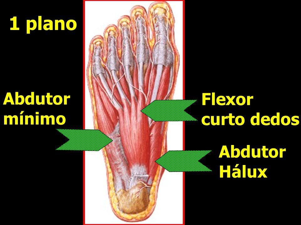 Abdutor Hálux Abdutor Hálux Abdutor mínimo Abdutor mínimo Flexor curto dedos Flexor curto dedos 1 plano