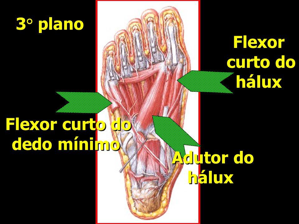 Flexor curto do dedo mínimo Flexor curto do dedo mínimo Flexor curto do hálux Flexor curto do hálux Adutor do hálux Adutor do hálux 3° plano