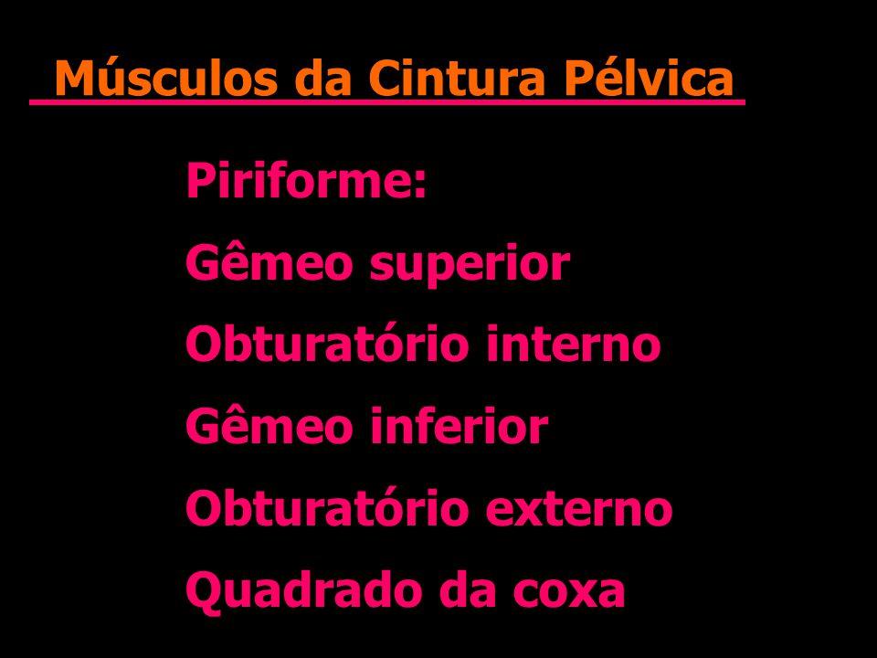 Músculos da Cintura Pélvica Piriforme: Gêmeo superior Obturatório interno Gêmeo inferior Obturatório externo Quadrado da coxa Piriforme: Gêmeo superio