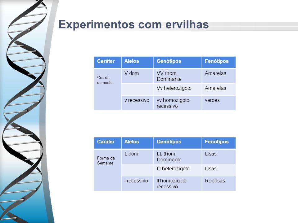 Experimentos com ervilhas CaráterAlelosGenótiposFenótipos Cor da semente V domVV (hom. Dominante Amarelas Vv heterozigotoAmarelas v recessivovv homozi