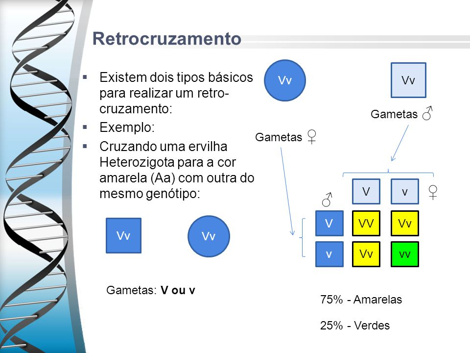 Retrocruzamento Existem dois tipos básicos para realizar um retro- cruzamento: Exemplo: Cruzando uma ervilha Heterozigota para a cor amarela (Aa) com