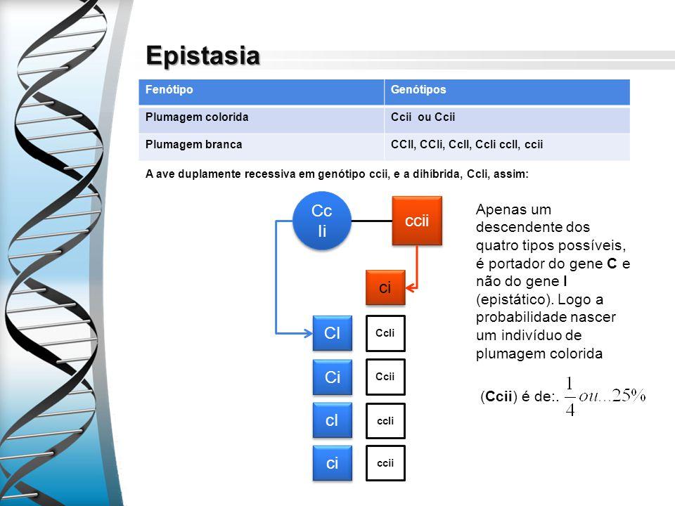 Epistasia FenótipoGenótipos Plumagem coloridaCcii ou Ccii Plumagem brancaCCII, CCIi, CcII, CcIi ccII, ccii A ave duplamente recessiva em genótipo ccii