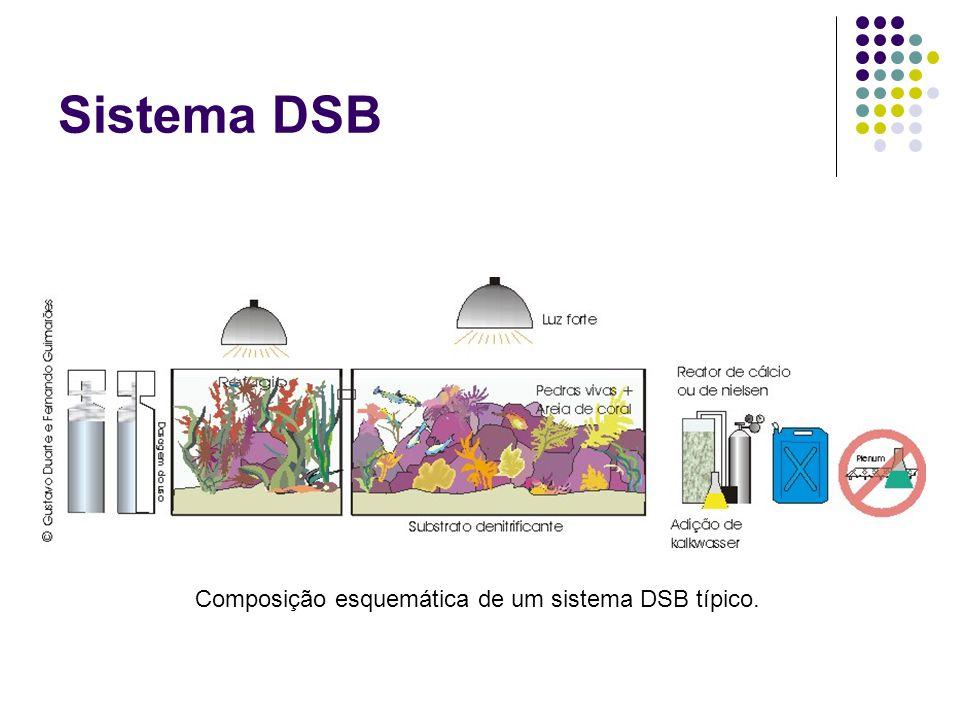 Sistema DSB Composição esquemática de um sistema DSB típico.
