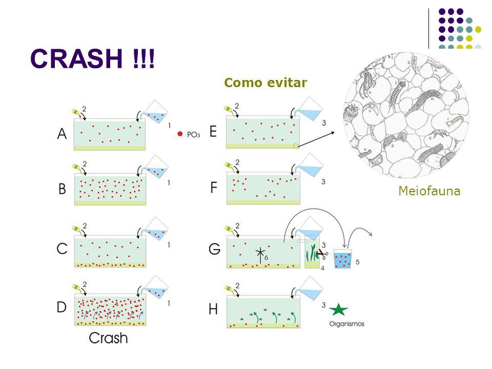 CRASH !!! Como evitar Meiofauna
