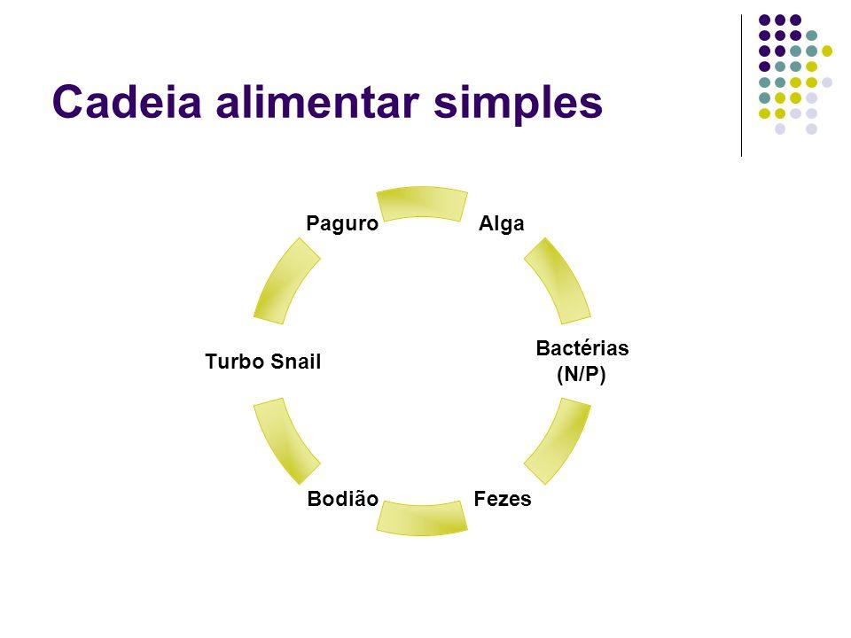 Cadeia alimentar simples Paguro Turbo Snail BodiãoFezes Bactérias (N/P) Alga