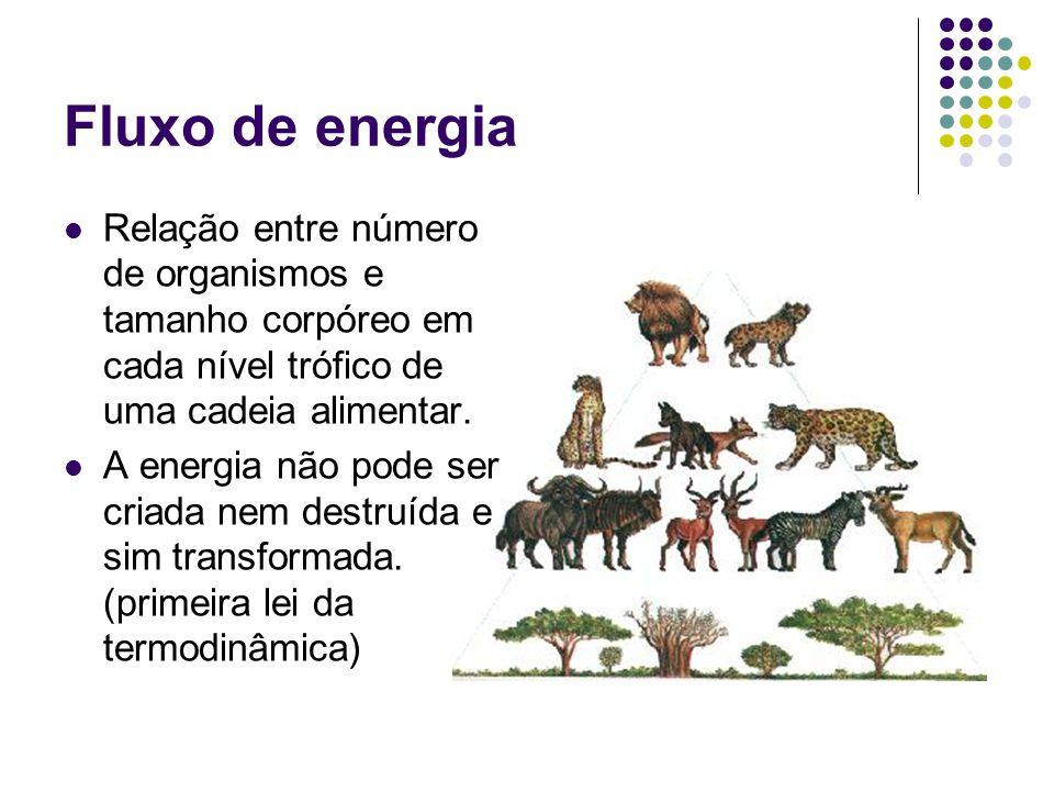 Fluxo de energia Relação entre número de organismos e tamanho corpóreo em cada nível trófico de uma cadeia alimentar. A energia não pode ser criada ne