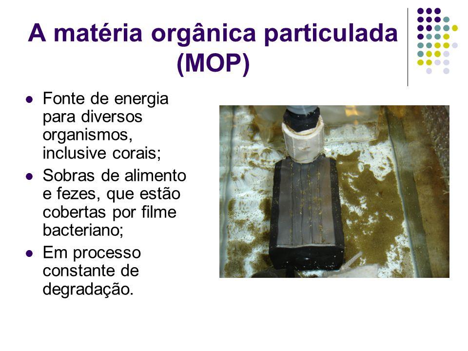 A matéria orgânica particulada (MOP) Fonte de energia para diversos organismos, inclusive corais; Sobras de alimento e fezes, que estão cobertas por f