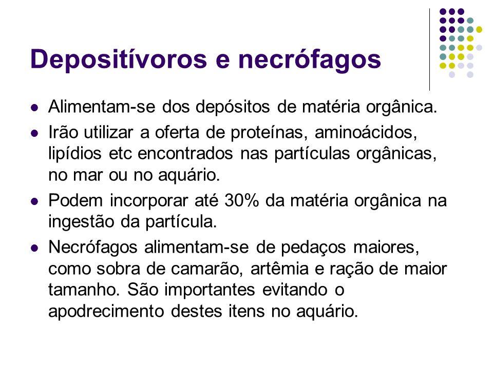 Depositívoros e necrófagos Alimentam-se dos depósitos de matéria orgânica. Irão utilizar a oferta de proteínas, aminoácidos, lipídios etc encontrados