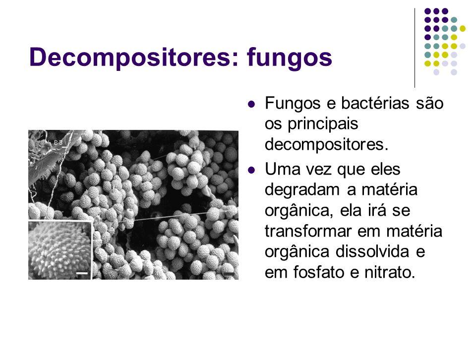 Decompositores: fungos Fungos e bactérias são os principais decompositores. Uma vez que eles degradam a matéria orgânica, ela irá se transformar em ma