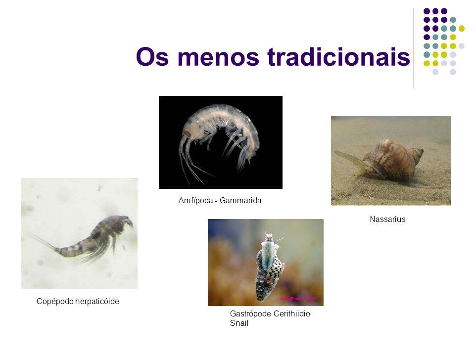 Os menos tradicionais Amfípoda - Gammarida Copépodo herpaticóide Nassarius Gastrópode Cerithiidio Snail