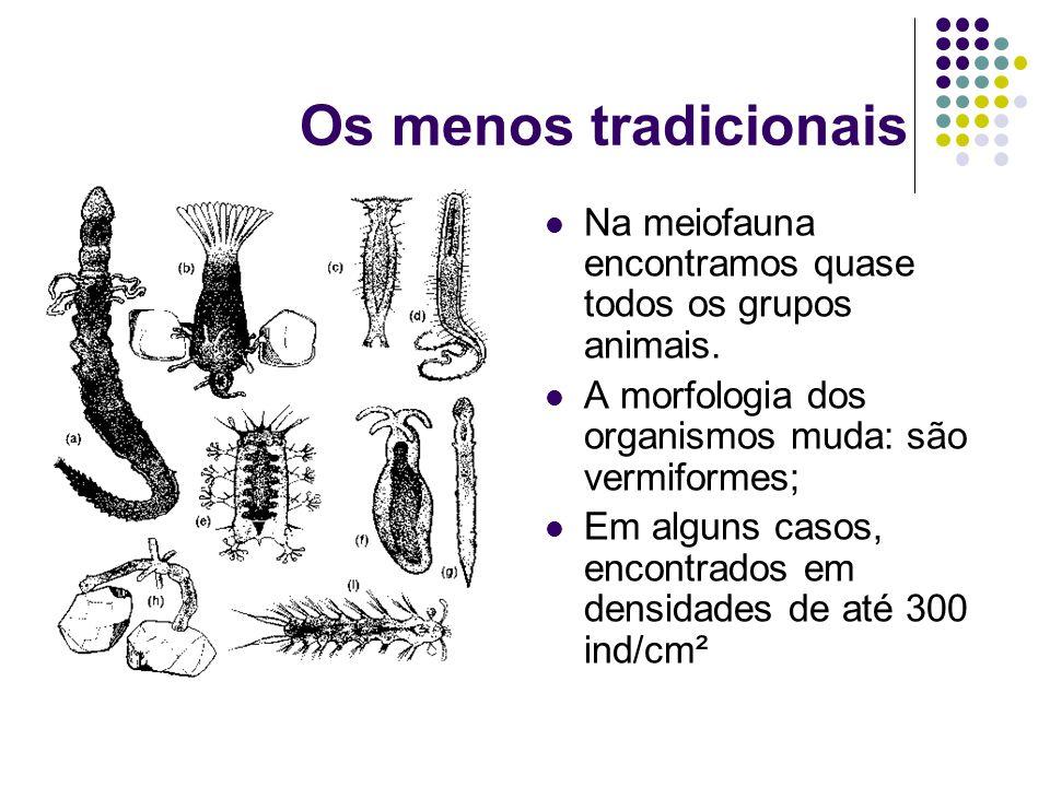 Os menos tradicionais Na meiofauna encontramos quase todos os grupos animais. A morfologia dos organismos muda: são vermiformes; Em alguns casos, enco