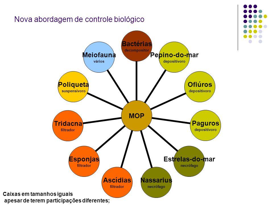 MOP Bactérias decompositor Pepino-do-mar depositívoro Ofiúros depositívoro Paguros depositívoro Estrelas-do- mar necrófago Nassarius necrófago Ascídia