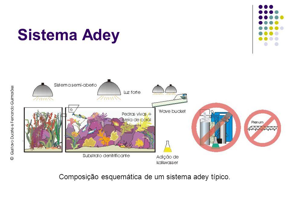 Sistema Adey: conceituação Consiste de vários módulos de aquários interligados de grande volume de água total, com uso de refúgios, filtro de algas e/ou mangue.