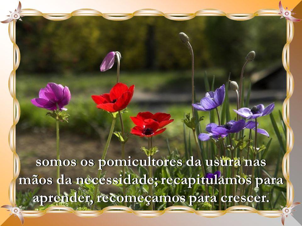 somos os pomicultores da usura nas mãos da necessidade; recapitulamos para aprender, recomeçamos para crescer.
