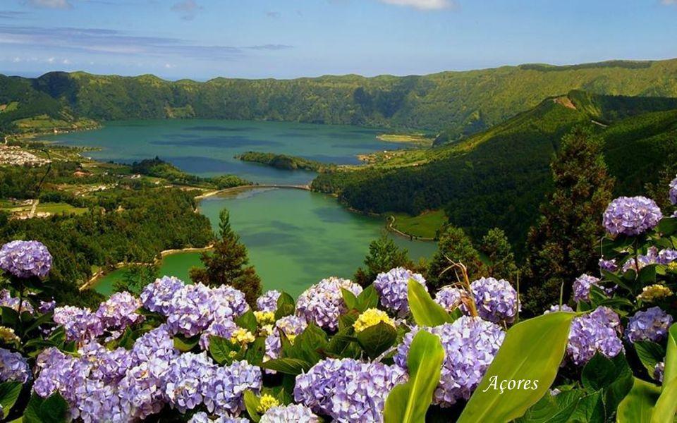 Golfinhos - Ilha do Pico - Açores