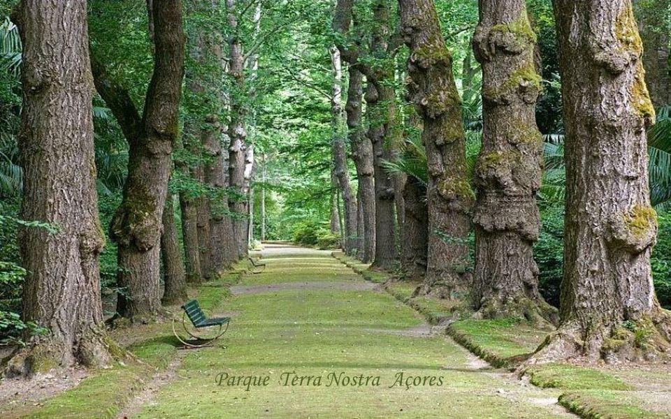 Parque Terra Nostra Açores