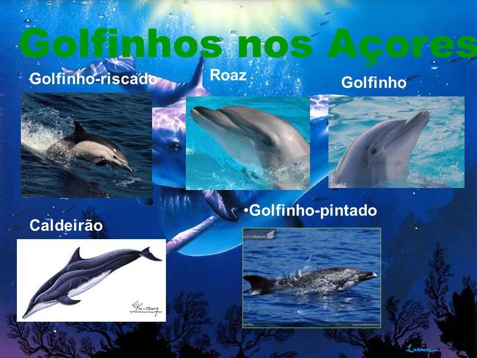 Golfinhos nos Açores Golfinho-pintado Golfinho-riscado Roaz Caldeirão Golfinho comum