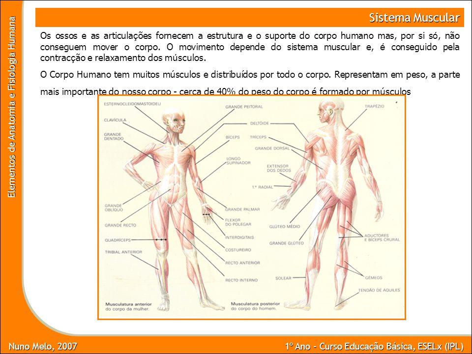 Nuno Melo, 2007 1º Ano - Curso Educação Básica, ESELx (IPL) Elementos de Anatomia e Fisiologia Humana Sistema Muscular FUNÇÕES MOVIMENTO DO CORPO - O movimento depende do funcionamento integrado de ossos, articulações e músculos (esqueléticos).