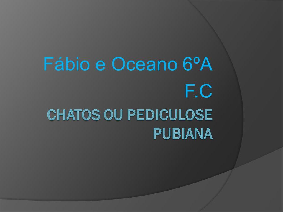 Chatos A Pediculose Pubiana (vulgarmente conhecida por Chatos ) foi identificada à séculos sendo originada por pequenos piolhos (Phithirus pubis) e respectivas lêndeas.