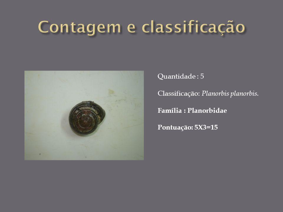 Quantidade : 5 Classificação: Planorbis planorbis. Família : Planorbidae Pontuação: 5X3=15