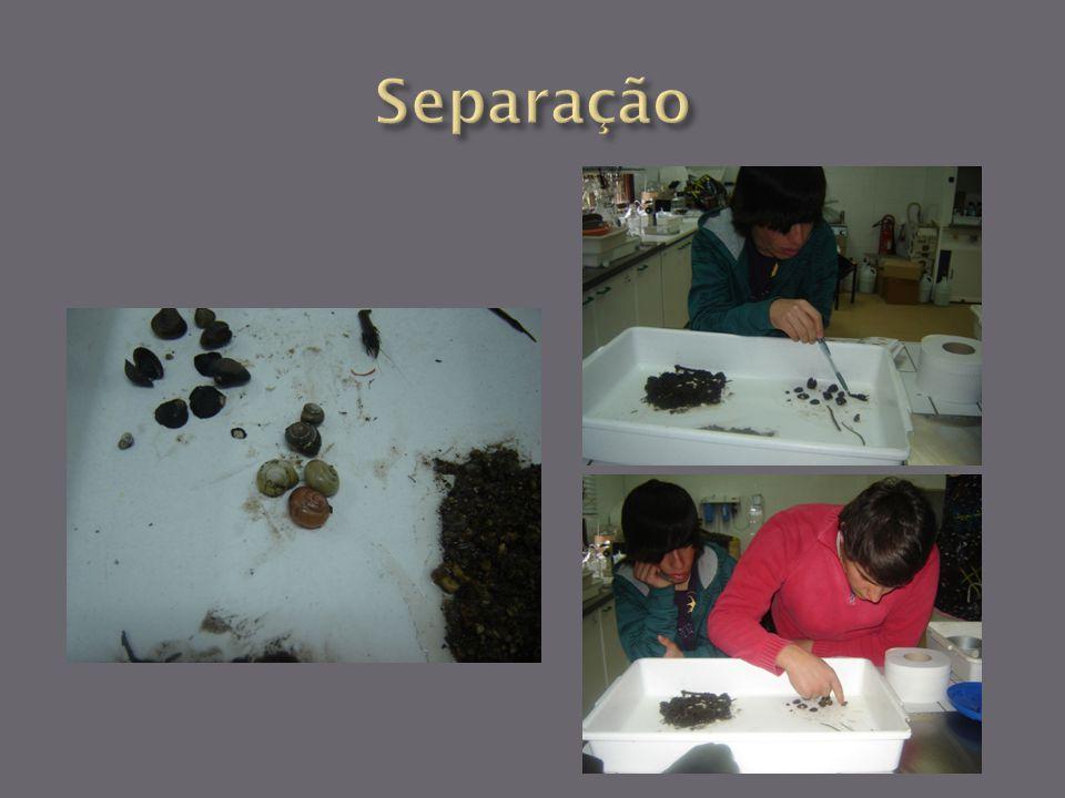 Quantidade : 1 Classificação: Bithynia tentaculata Família: Bithyniidae Pontuação: 3