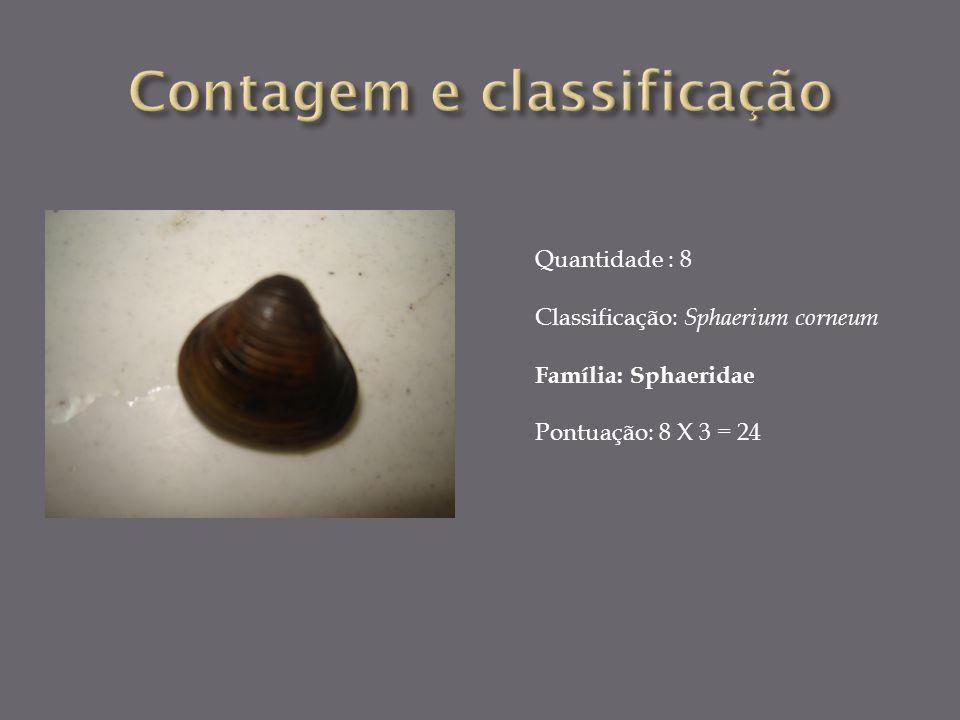 Quantidade : 8 Classificação: Sphaerium corneum Família: Sphaeridae Pontuação: 8 X 3 = 24