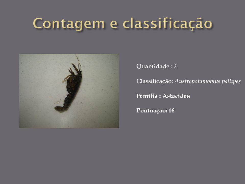 Quantidade : 2 Classificação: Austropotamobius pallipes Família : Astacidae Pontuação: 16