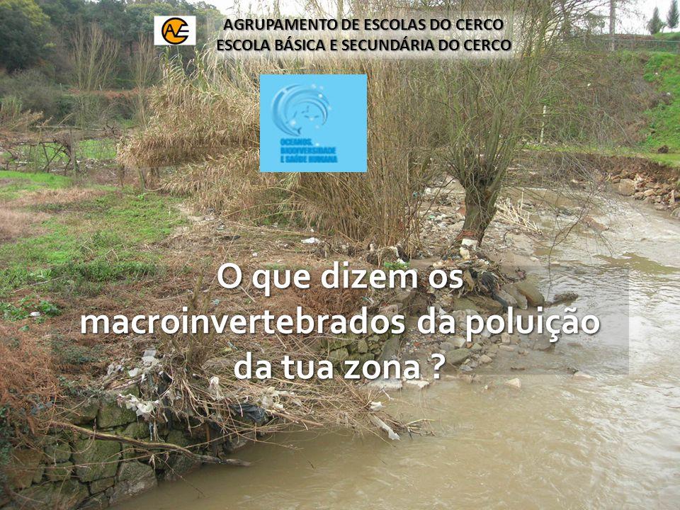 O que dizem os macroinvertebrados da poluição da tua zona .