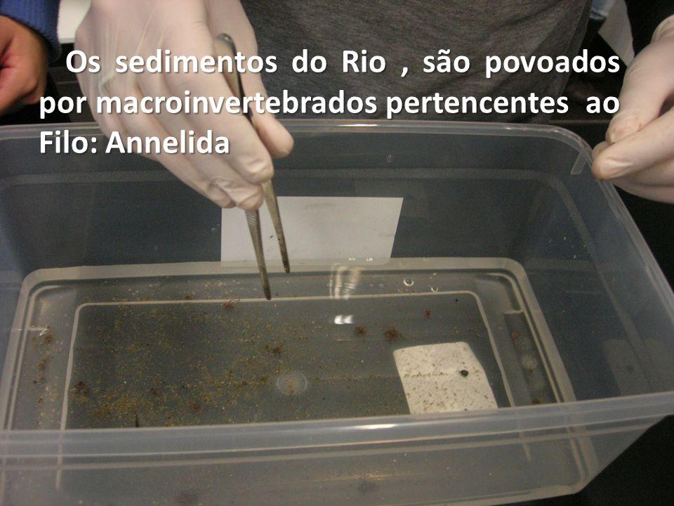 Os sedimentos do Rio, são povoados por macroinvertebrados pertencentes ao Filo: Annelida