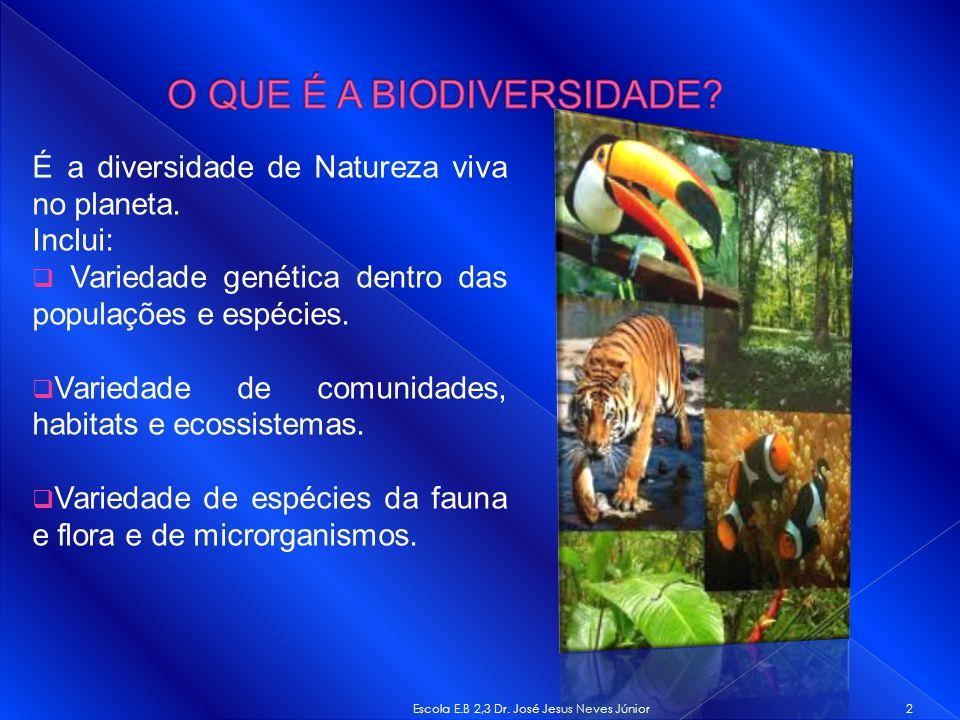 É a diversidade de Natureza viva no planeta. Inclui: Variedade genética dentro das populações e espécies. Variedade de comunidades, habitats e ecossis