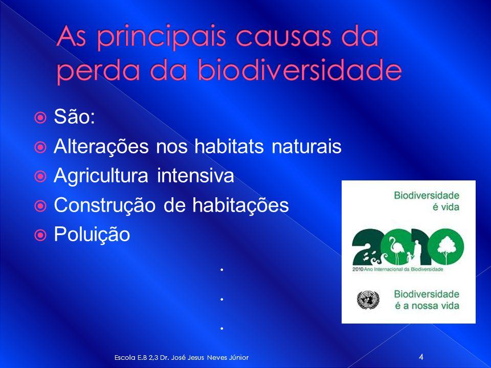 São: Alterações nos habitats naturais Agricultura intensiva Construção de habitações Poluição. Escola E.B 2,3 Dr. José Jesus Neves Júnior 4