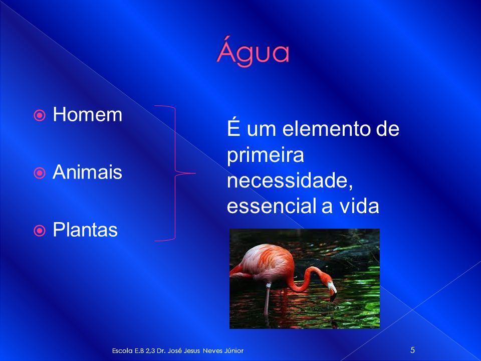 Homem Animais Plantas Escola E.B 2,3 Dr. José Jesus Neves Júnior 5 É um elemento de primeira necessidade, essencial a vida