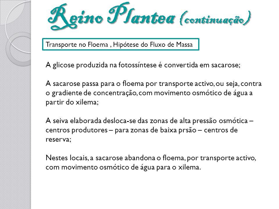 Reino Plantea (continuação) Transporte no Floema, Hipótese do Fluxo de Massa A glicose produzida na fotossíntese é convertida em sacarose; A sacarose