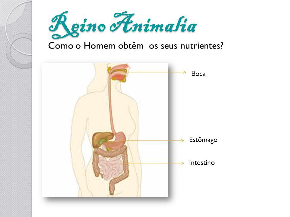 Reino Animalia Boca Estômago Intestino Como o Homem obtêm os seus nutrientes?