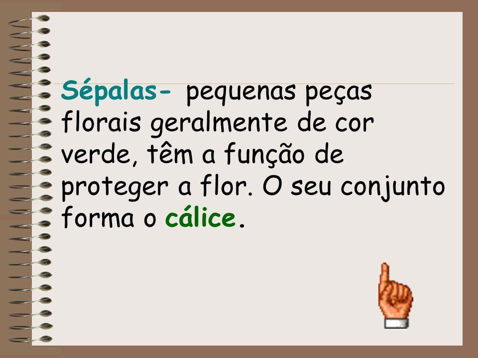 Sépalas- pequenas peças florais geralmente de cor verde, têm a função de proteger a flor. O seu conjunto forma o cálice.
