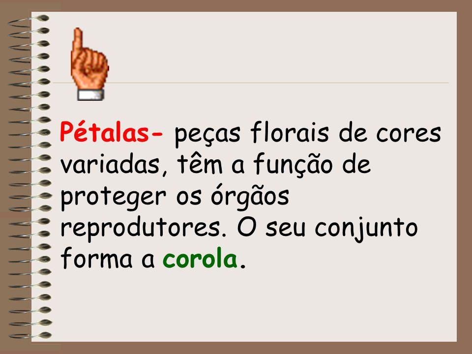 Pétalas- peças florais de cores variadas, têm a função de proteger os órgãos reprodutores. O seu conjunto forma a corola.