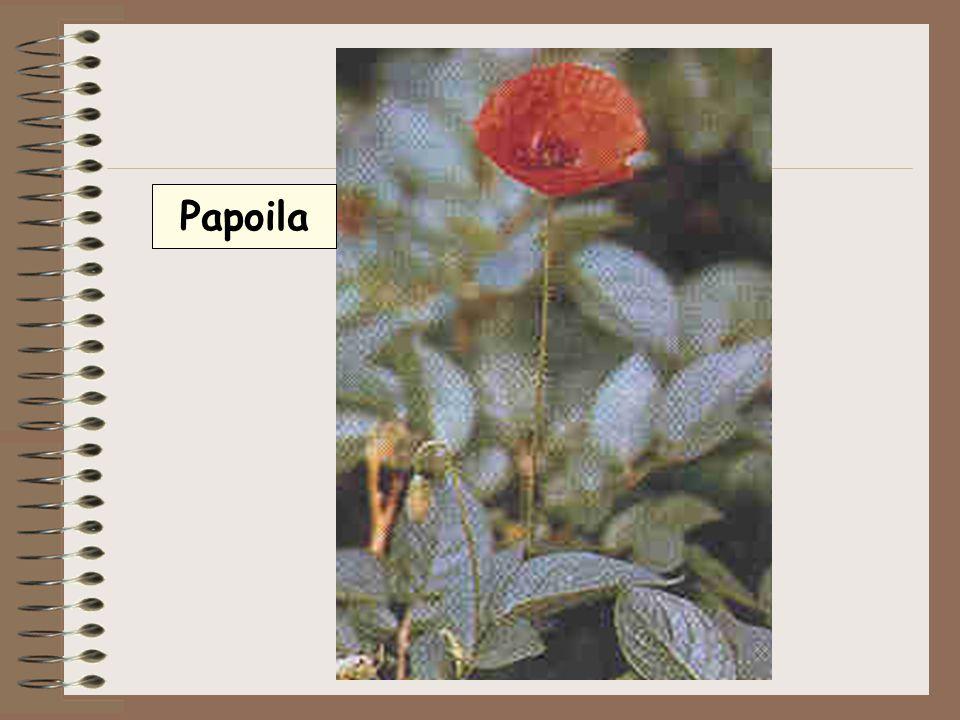 Pétalas- peças florais de cores variadas, têm a função de proteger os órgãos reprodutores.