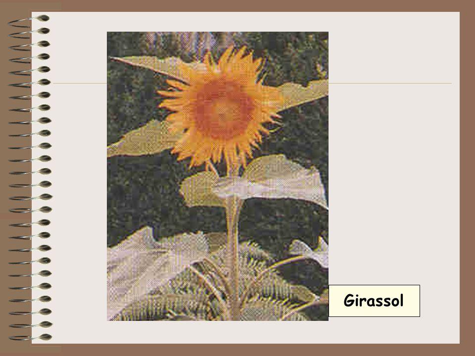 O gineceu é a parte feminina da flor e é formada pelos carpelos.