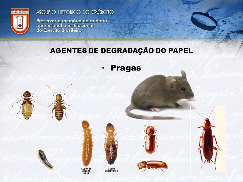 AGENTES DE DEGRADAÇÃO DO PAPEL Pragas