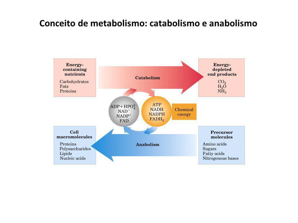 Conceito de metabolismo: catabolismo e anabolismo