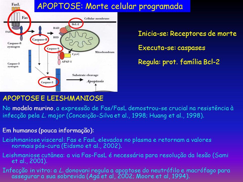 APOPTOSE: Morte celular programada Inicia-se: Receptores de morte Executa-se: caspases Regula: prot. família Bcl-2 APOPTOSE E LEISHMANIOSE No modelo m