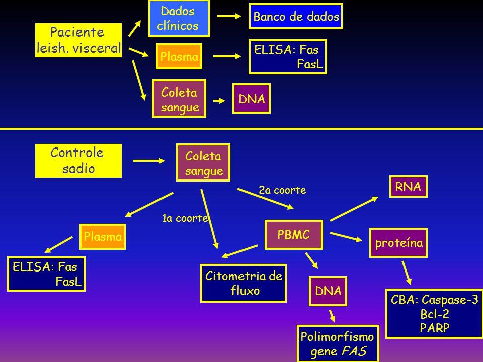 Plasma PBMC Coleta sangue Citometria de fluxo DNA RNA Polimorfismo gene FAS CBA: Caspase-3 Bcl-2 PARP proteína ELISA: Fas FasL Controle sadio Dados cl